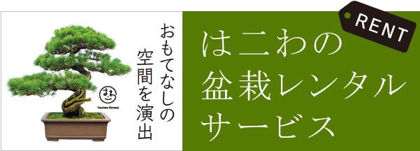 はニわの盆栽レンタルサービス